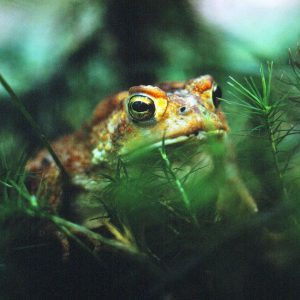 Close-up photo of a toad